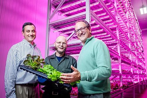Green Sense Farm