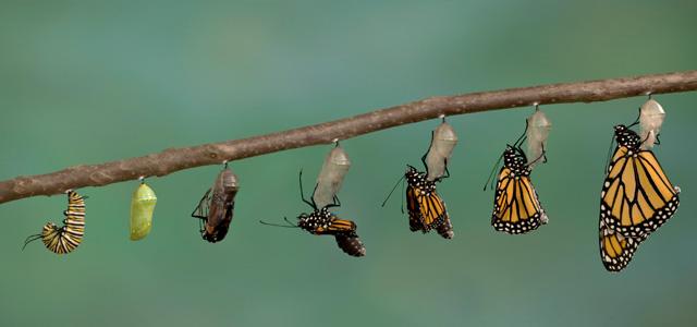 Transformation du papillon comme illustration de la transition connectée