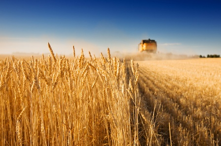 centre d'innovation agriculture iot australie
