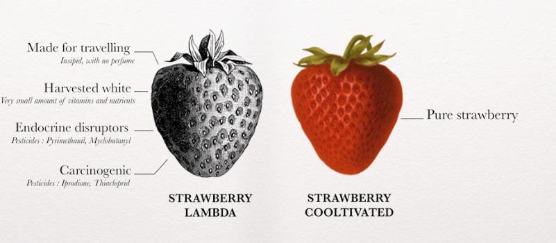 fraise agricool