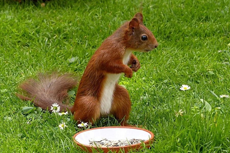 ecureuil rasberry pi 3