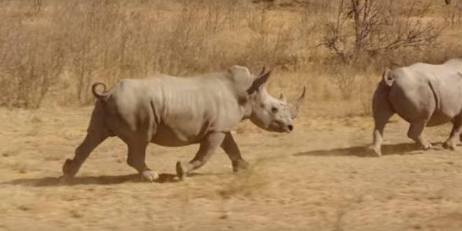 Quand l'IoT sert à protéger les rhinocéros des braconniers