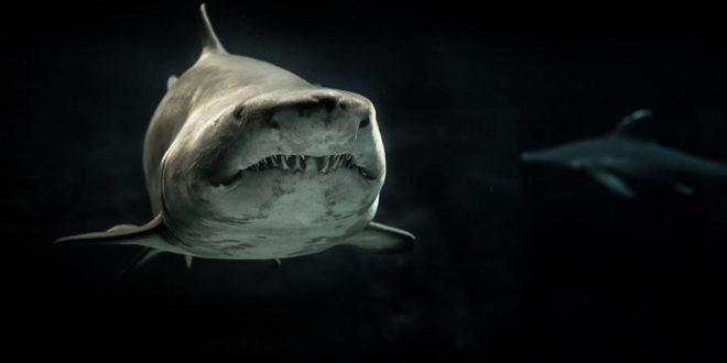 requins télémédecine