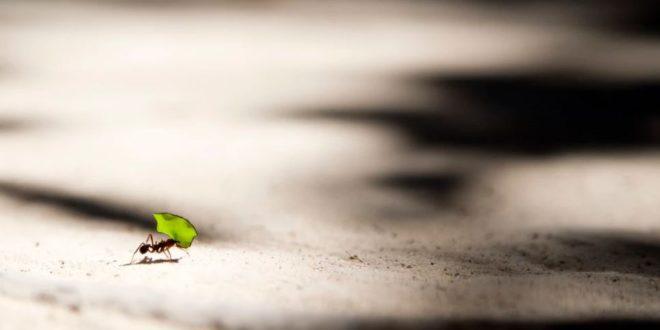 Antbot : un robot sans GPS inspiré d'une fourmi du désert
