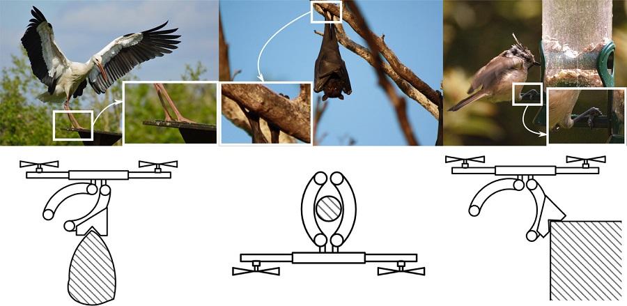 drone nature
