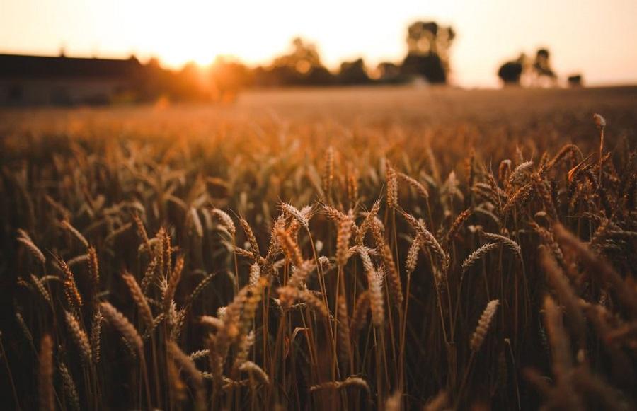 agriculture semtech