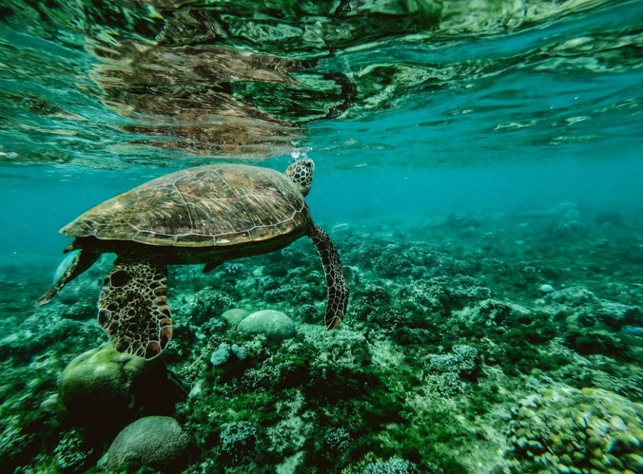 animaux marins tortue iot