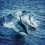 dauphins animaux marins iotdauphins animaux marins iot