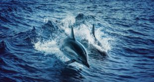 dauphins animaux marins iotdauphins animaux marins iot