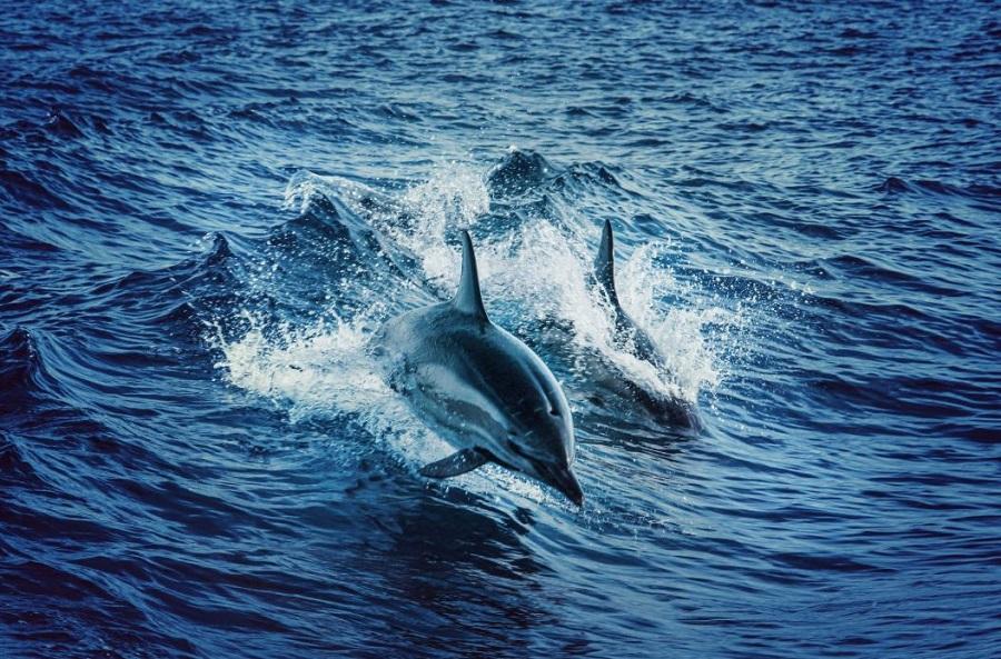 Suivre les animaux marins grâce à l'IoT : un défi technique