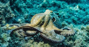 octopus lora semtech