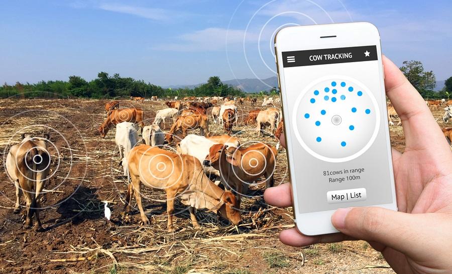 solution surveillance vache