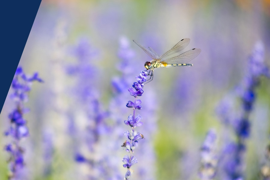 certification ceva dragonfly deutsch telekom